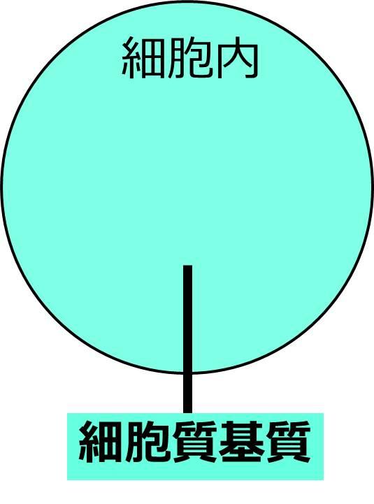 細胞膜で囲まれた内部が、細胞質基質であると表記した図