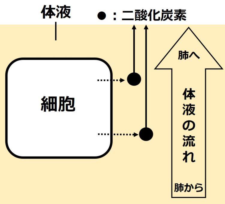 体液の循環による二酸化炭素の除去