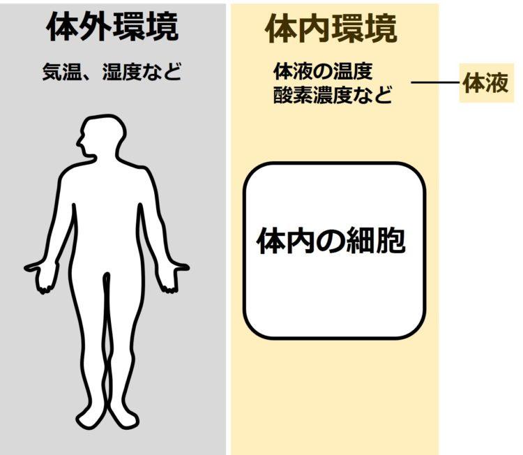 体外環境と体内環境