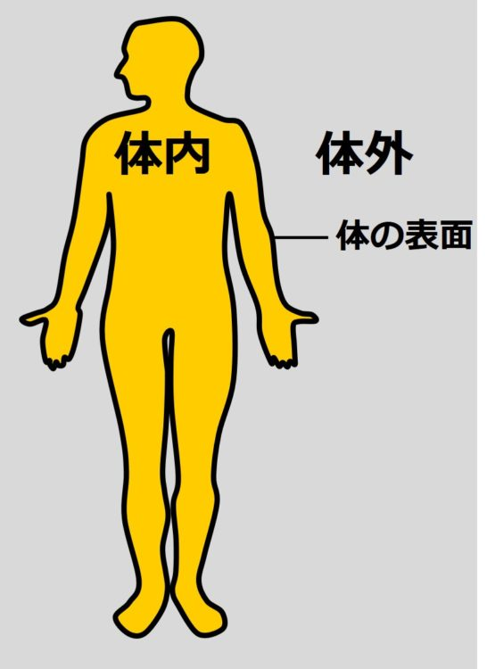ヒトの体が体内と体外に分かれていることを示す図