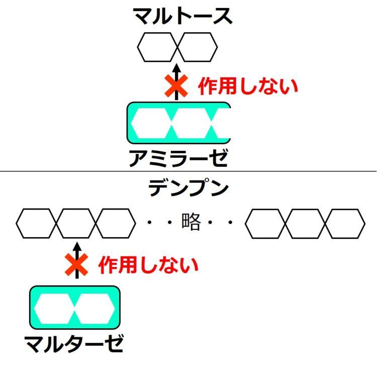 アミラーゼがマルトースに作用せず、マルターゼがデンプンに作用しないことを、矢印と×印で描いてある。