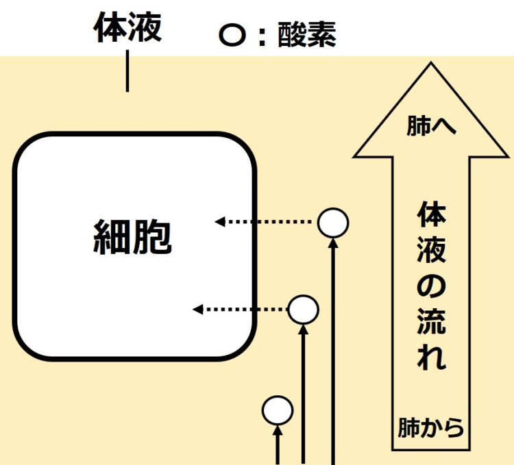 体液の循環による酸素の供給