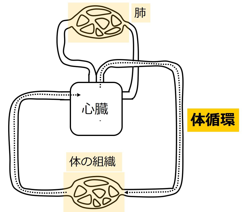 体循環おススメの記事カテゴリープロフィール