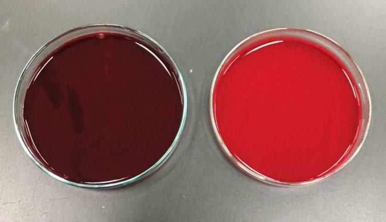 ブタの動脈血と静脈血