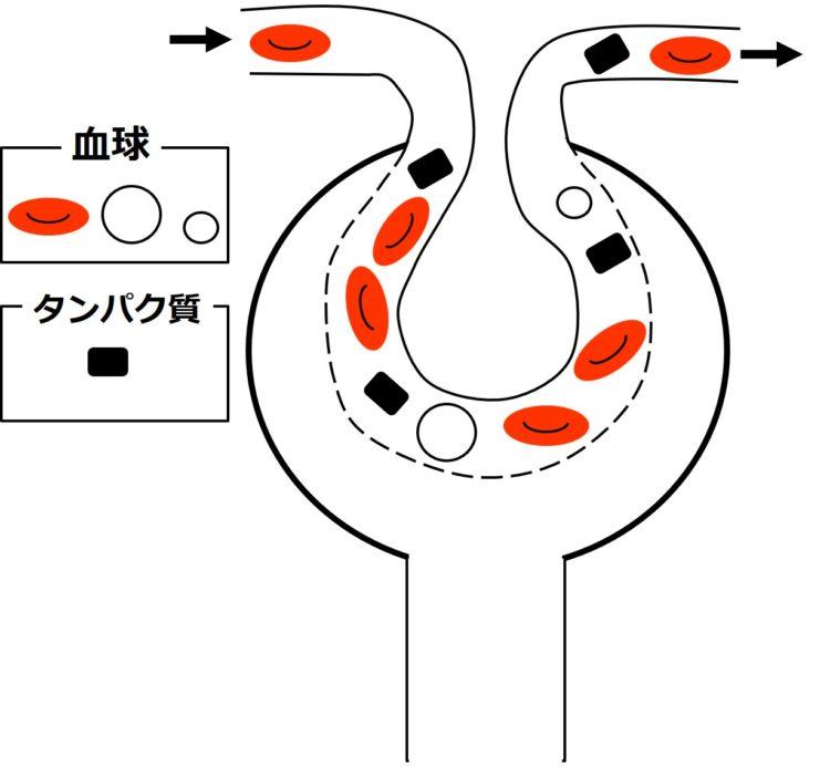 血球とタンパク質