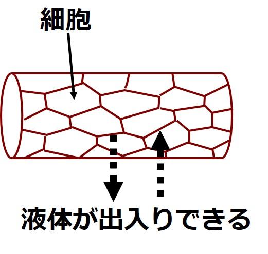 毛細血管の隙間