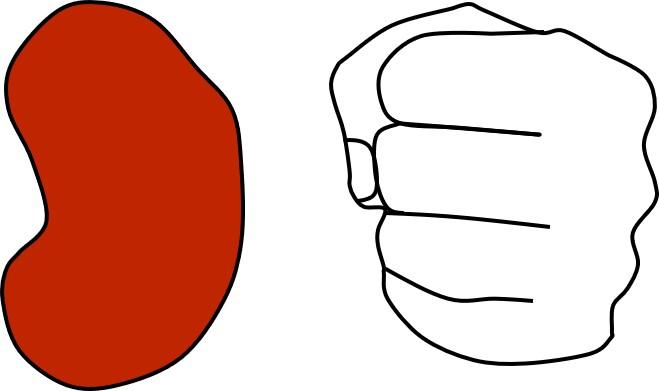 腎臓1個とこぶしを並べた図。ほぼ同じ大きさ。