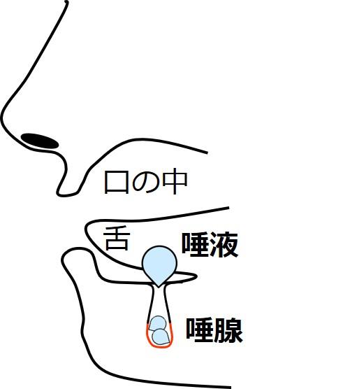 唾液腺の図