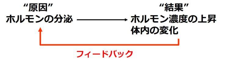 ホルモン分泌におけるフィードバック
