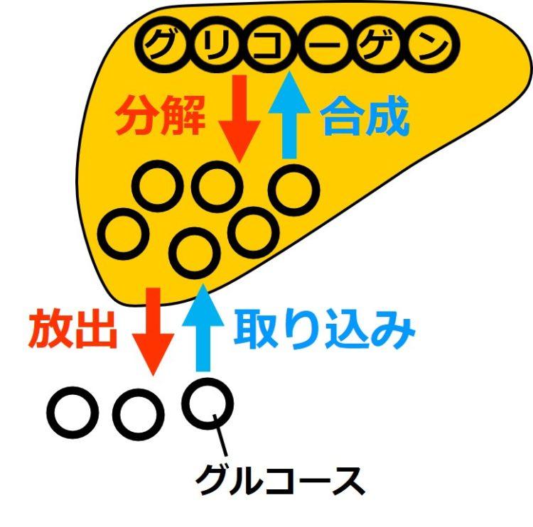 肝臓でのグリコーゲン合成と分解の図