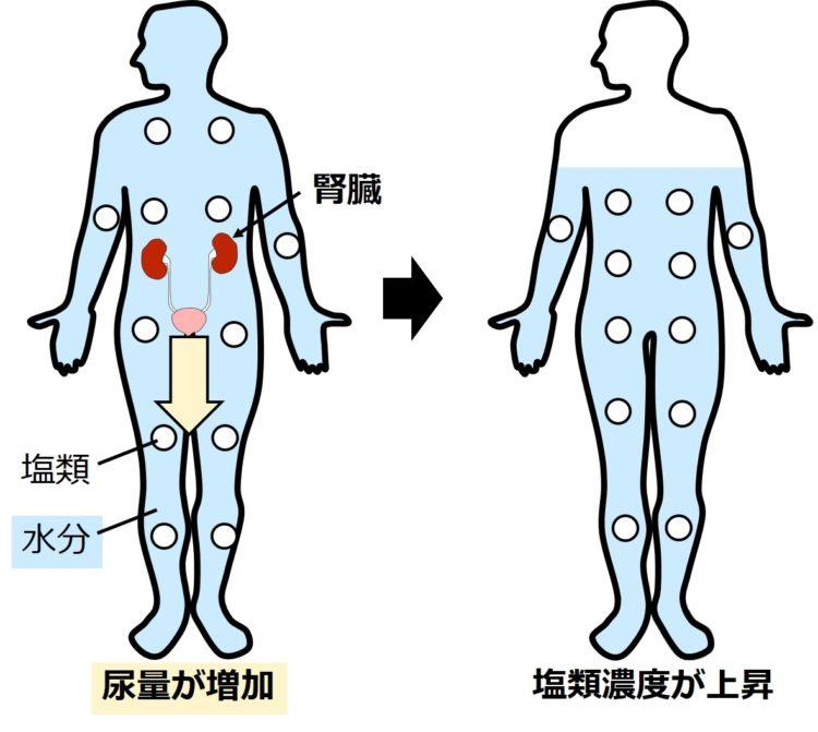 尿量増加による塩類濃度の上昇