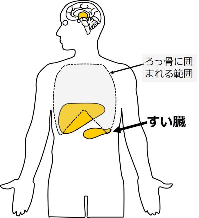 すい臓の位置