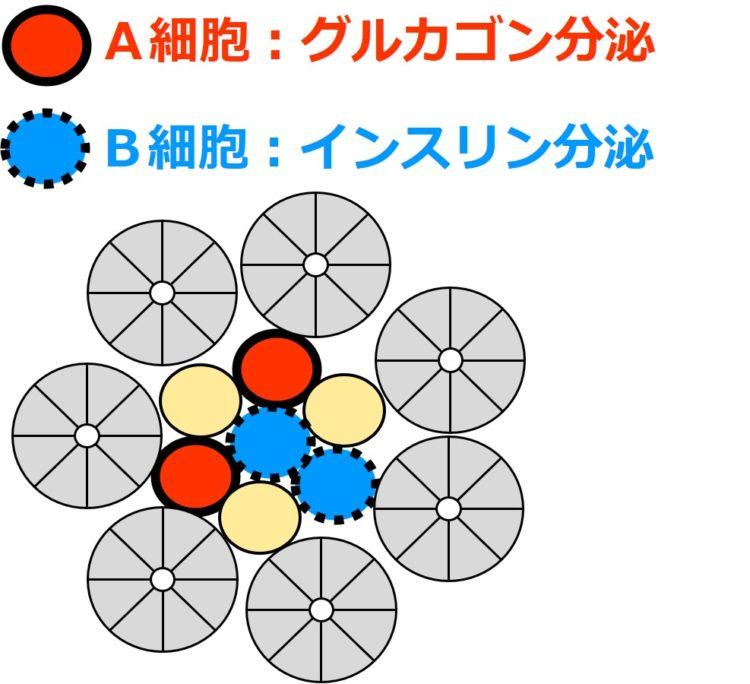 A細胞とB細胞