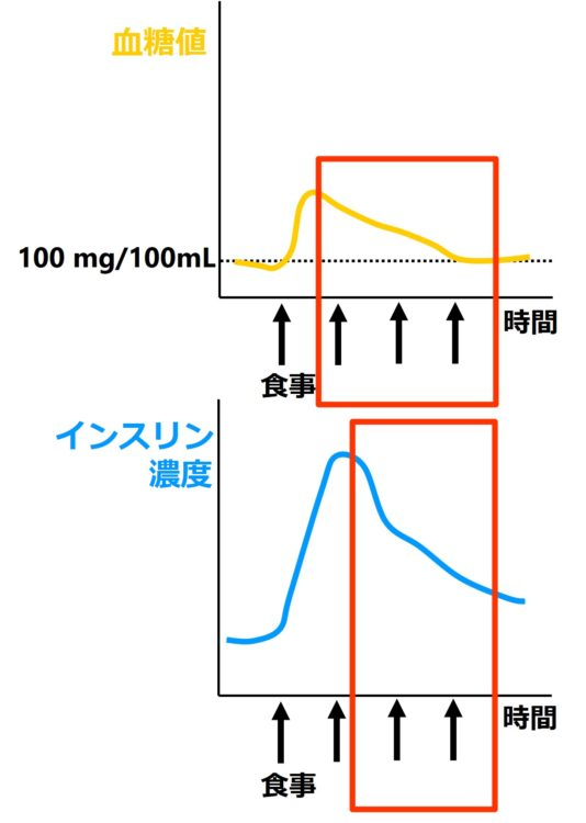 血糖値とインスリン濃度が元の値に戻っていく