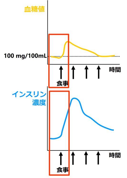 食事直後の血糖値とインスリン濃度変化