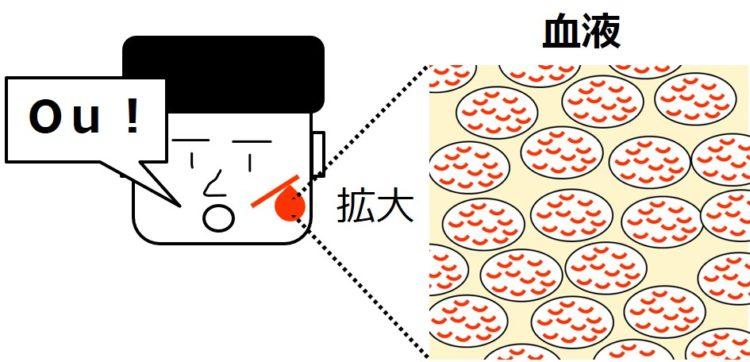赤い血液を拡大すると、赤いヘモグロビンを含む赤血球であふれている。