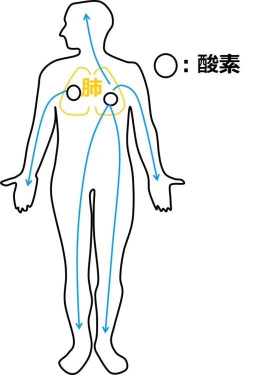 肺の酸素が、両手両足、頭の先端など体の隅々まで達する様子を描いた図