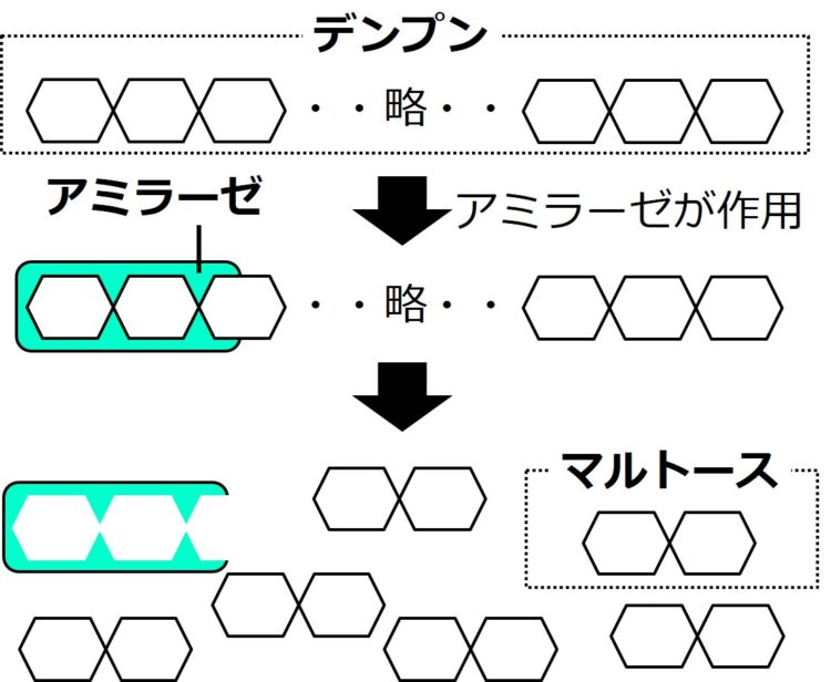 六角形の構造が1列に多数つながったデンプンに、アミラーゼが結合している。アミラーゼは、デンプンの六角形を2つ半覆う形状で描かれている。アミラーゼの作用の後、デンプンは、六角形が2つつながった構造をもつマルトースに分解している。