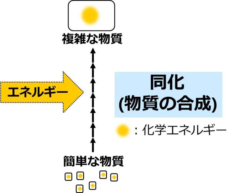 小さな正方形で描かれた簡単な物質が、多数の化学反応を経て、大きな長方形で描かれた複雑な物質に変化することを、多数の矢印を使った流れ図で描いてある。簡単な物質の小さな正方形内には、化学エネルギーを示す小さな黄色の丸、複雑な物質の大きな長方形内には、大きな黄色の丸が描かれている。これらの反応過程へのエネルギーの供給を示す大きな黄色い矢印が描かれている。