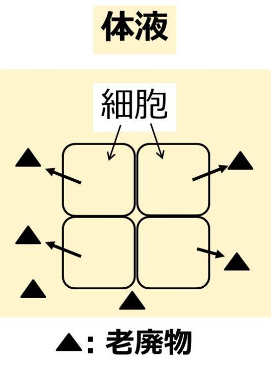 4つの細胞が体液中に老廃物を1個ずつ排出する図