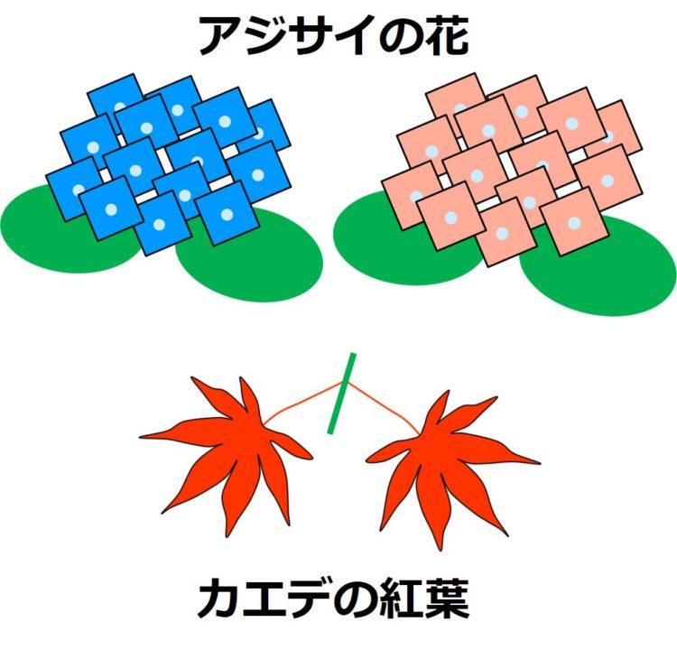 青とピンクのアジサイの花、掌状のカエデの紅葉の図