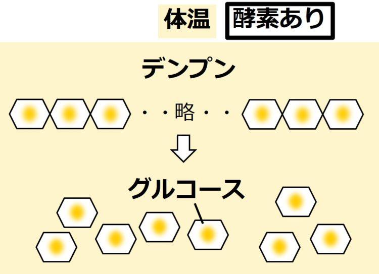 体温程度の温度を表現した薄黄色の背景の中で、デンプンがグルコースに分解している図。