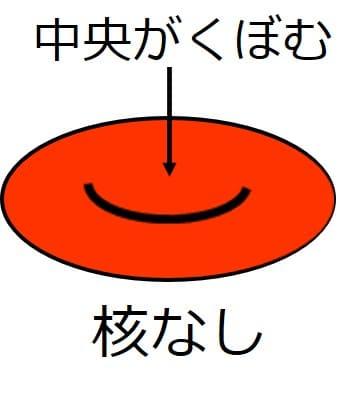 赤くて中央部がくぼんだ赤血球の図。