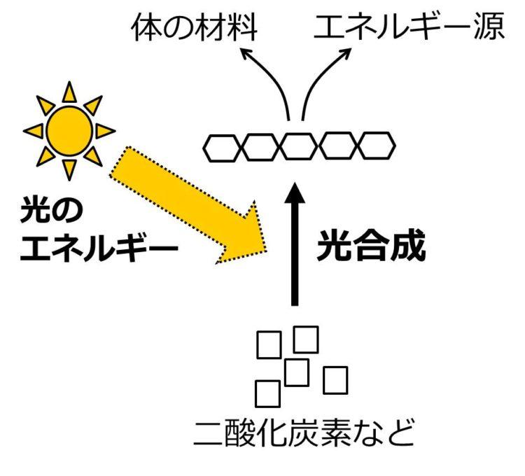 光合成によって二酸化炭素から合成された物質が、体の材料やエネルギー源になることを、矢印をつかった流れ図で示してある。