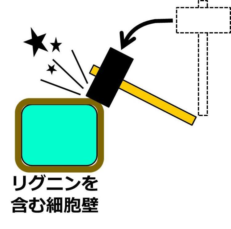 リグニンを含む細胞壁が、濃い色で分厚く描かれている。その細胞壁を金づちでたたくと、堅くて星が飛んでいるイメージ図。