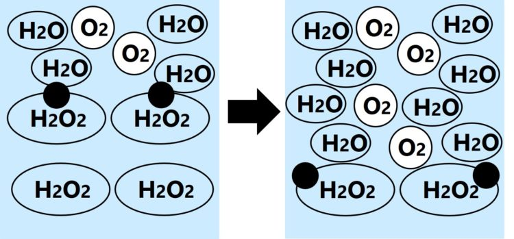 2個の黒丸は、それぞれ、別の過酸化水素にくっつき、その直後に過酸化水素が水と酸素に分解している図。