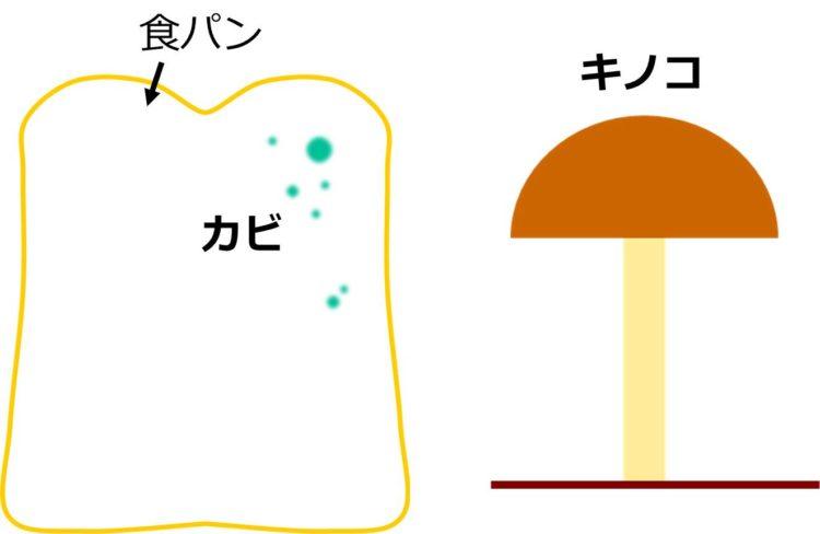 食パンについたカビと、地面からはえたキノコの図