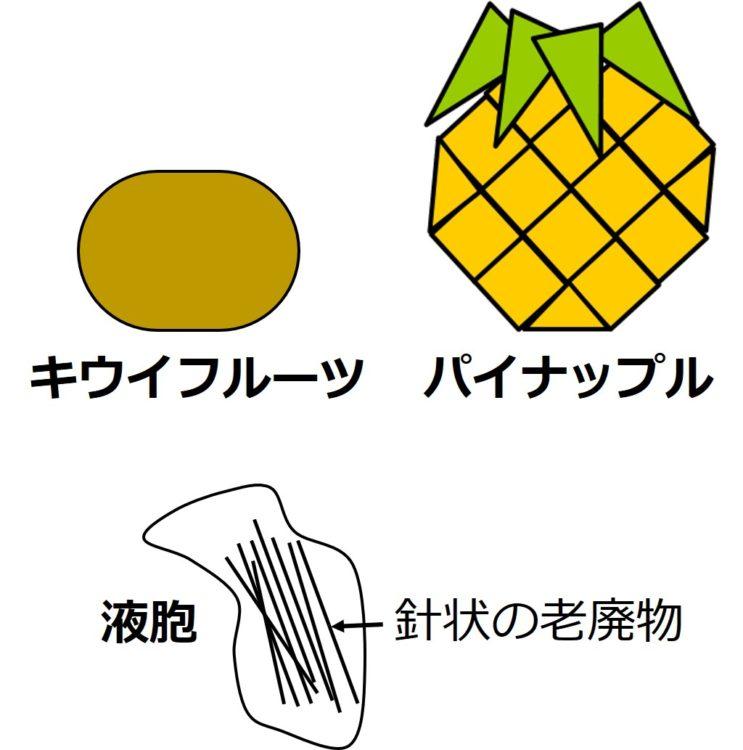 キウイフルーツとパイナップルの絵。その下に、内部に針状の老廃物が何本も(多数の線で表現)入っている図。