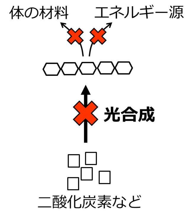 光がないと、光合成が行われないことを、流れ図の矢印にバツ印を書いて示した図。