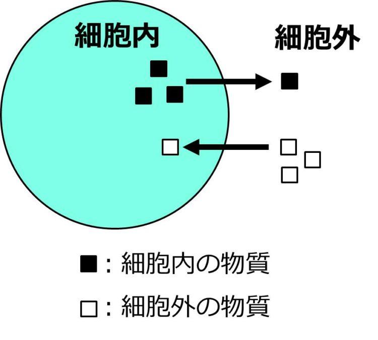 細胞内外へ物質が出入りする様子を、矢印で描いた図