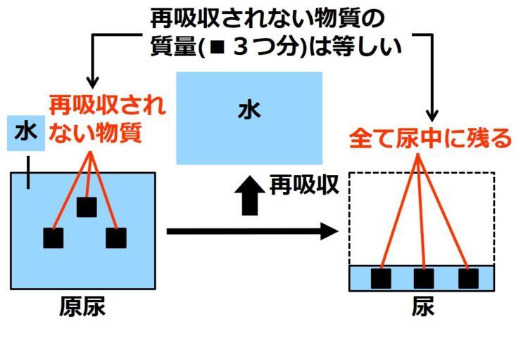 原尿を大きな四角、尿を小さな四角で描いてある。四角の大きさは水の量を示す。原尿の大きな四角内に、再吸収されない物質が、黒い小さな四角で3つ描かれている。再吸収されないため、尿中にも黒い小さい四角が3つ描かれている。つまり、原尿中の質量と尿中の質量は等しい(黒い小さな四角3つ分)。