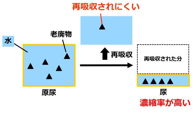 原尿が大きい四角、尿が小さい四角で描いてある。原尿の大きい四角内には、老廃物が5つ、三角で描いてあり、このうち、1つが再吸収され、4つが、尿の小さい四角内に描かれている。前の図の、体に必要な物質と比べ、尿中に残る個数が多く、尿縮率が高い。