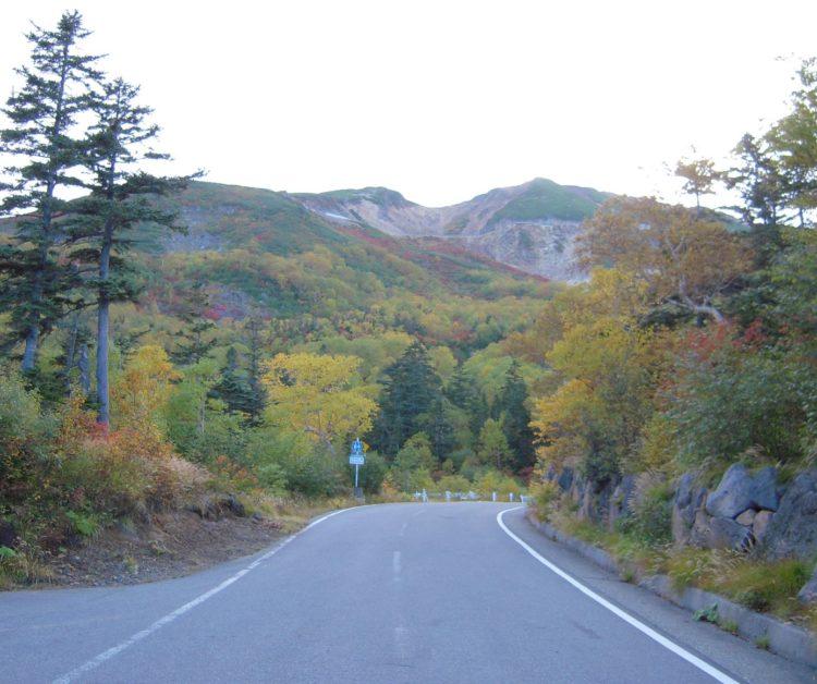 山の森林植生の写真