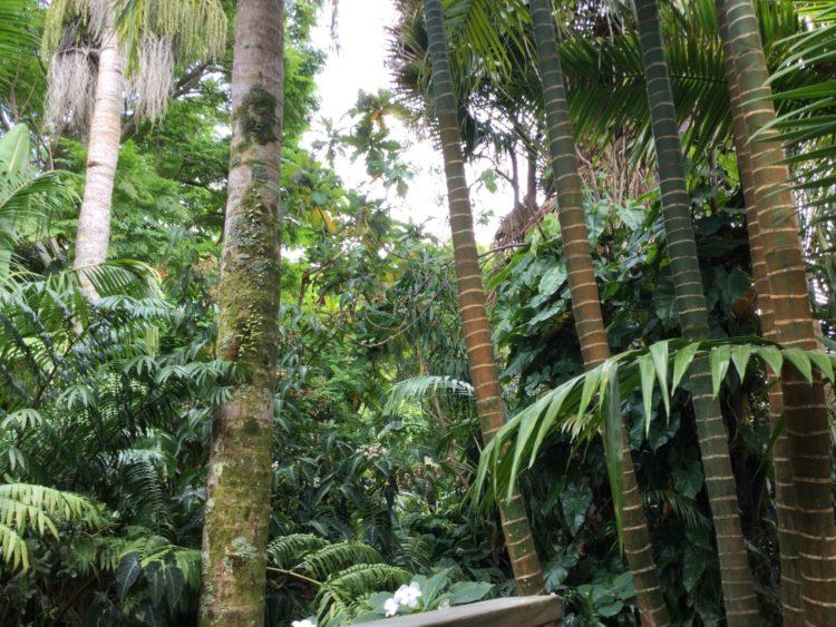 熱帯雨林の写真