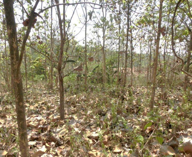 雨緑樹林の写真。真夏の暑さの中、たくさんの葉が落ちている。
