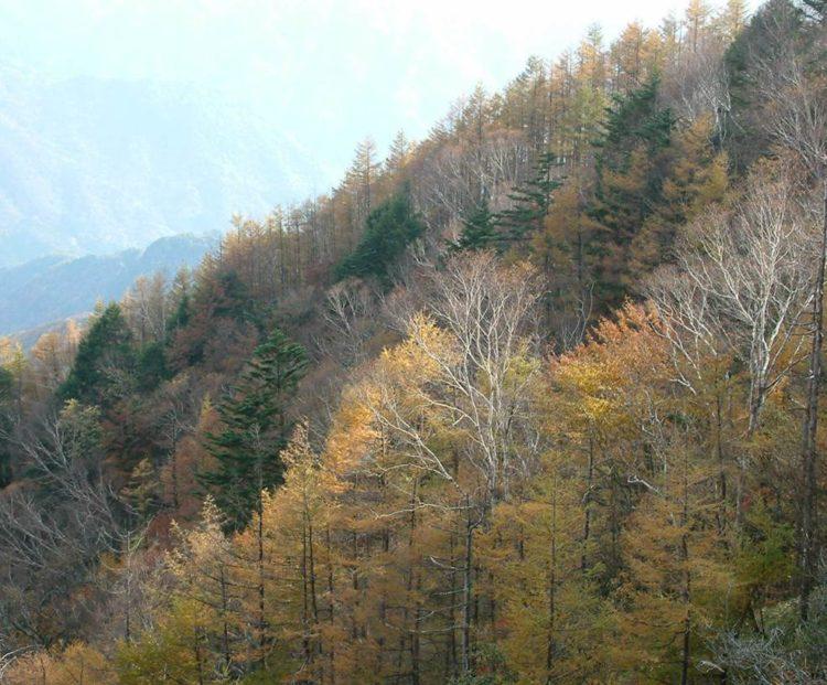 夏緑樹林の写真。木々が紅葉している。