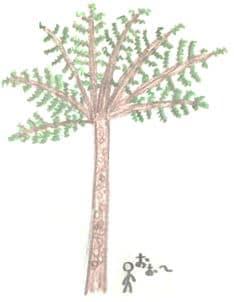 ヒトの伸長の数倍に生長したヘゴの絵。