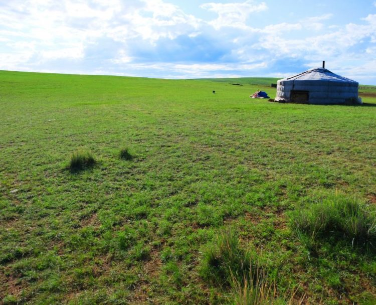 ステップの写真。ゴルフ場の芝のような草原が移っている。樹木は1本も写っていない。