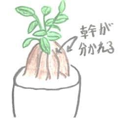 小さなガジュマルの絵。幹が4本に分かれて土に入っていく。幹の上には葉が茂っている。