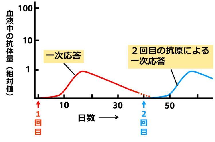 2回目の注射時のグラフは、1回目の注射時のグラフと形がほぼ同じである。
