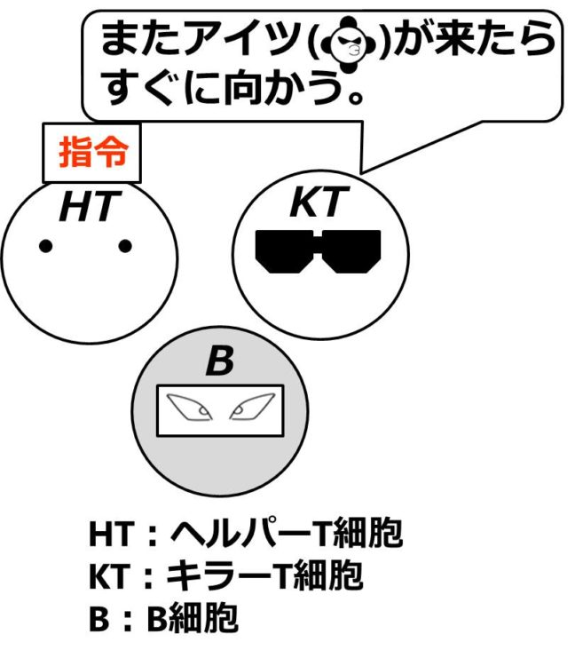 ヘルパーT細胞、キラーT細胞、B細胞が描いてあり、キラーT細胞が「またアイツ(同じ病原体)が来たらすぐに向かう」と言っている。