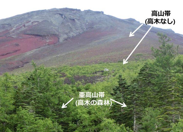 森林限界付近で撮った写真。手前には、高木の森(亜高山帯)が、奥には、高木のない高山帯がうつっている。