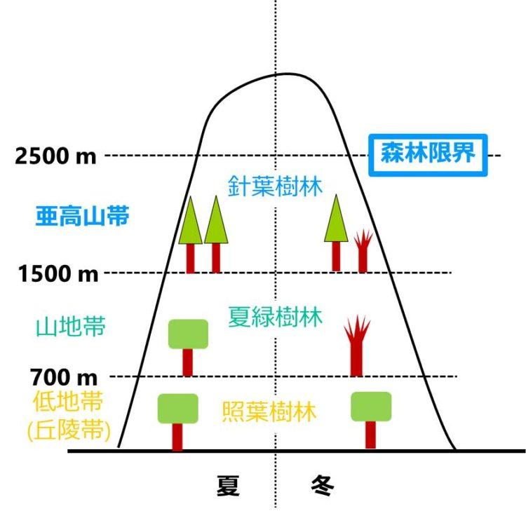 森林限界の位置の図