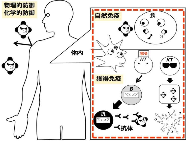 免疫の全体像を描いた図