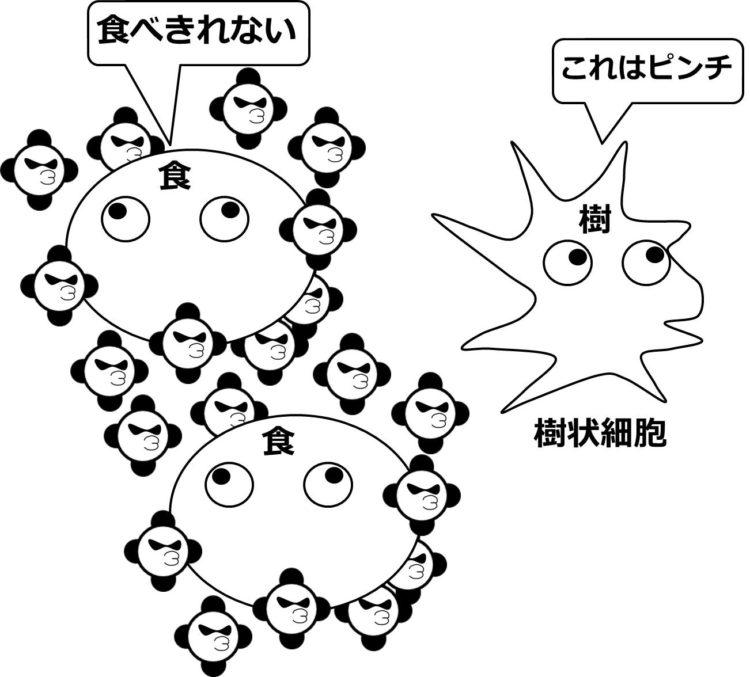 巨大な食細胞が、大量の病原体に囲まれ、樹状細胞が、その場を離れていく様子を描いてある。