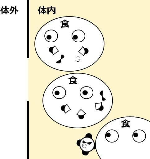 食細胞が病原体を食べて、ばらばらに分解する図